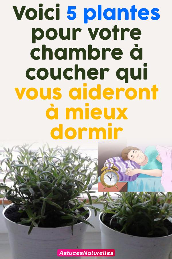 Voici 5 plantes pour votre chambre à coucher qui vous aideront à mieux dormir