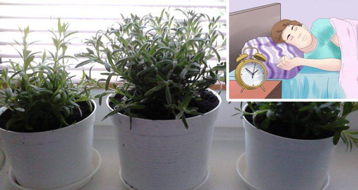Voici 5 plantes pour votre chambre coucher qui vous aideront mieux dormir - Chambre a coucher pour couple ...