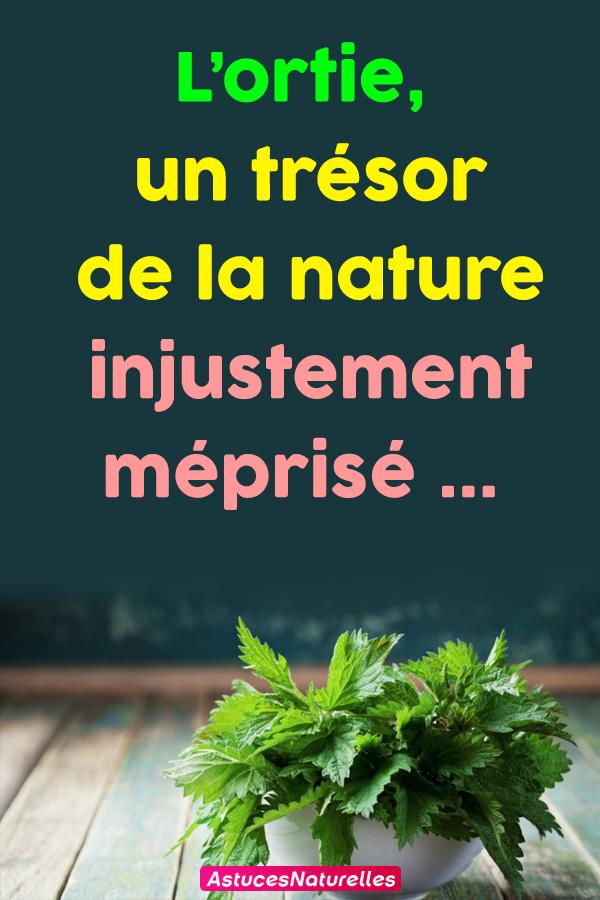 L'ortie, un trésor de la nature injustement méprisé…