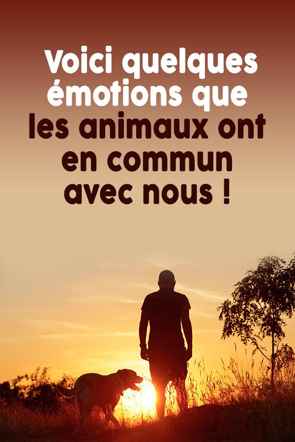 Voici quelques émotions que les animaux ont en commun avec nous !