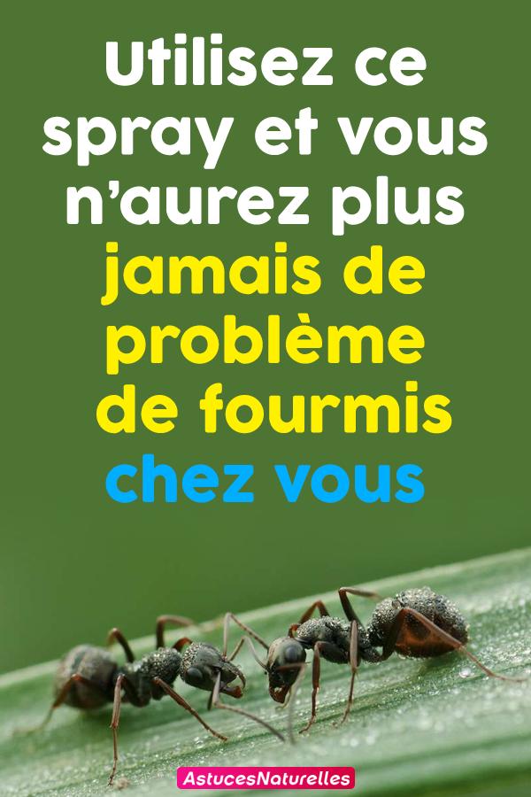 Utilisez ce spray et vous n'aurez plus jamais de problème de fourmis chez vous