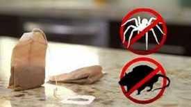 Utilisez cette astuce et Vous ne Verrez ni souris ni araignées de sitôt dans votre demeure …