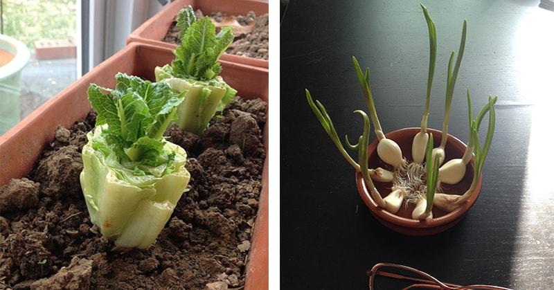 7 légumes que vous pouvez acheter une fois et cultiver pour toujours !