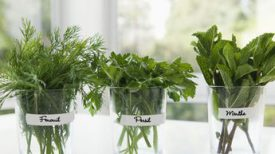 comment-cultiver-des-plantes-aromatiques