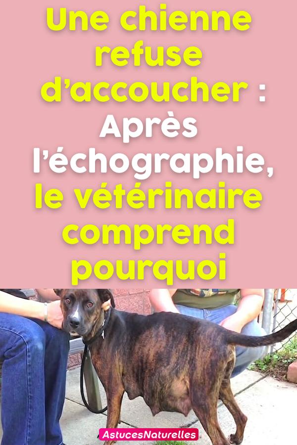 Une chienne refuse d'accoucher : Après l'échographie, le vétérinaire comprend pourquoi