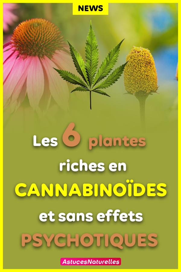 6 Plantes en dehors du cannabis qui sont PLUS riches en cannabinoïdes …