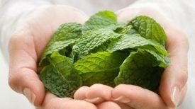 mint_leaves
