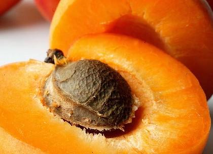 noyau-abricot