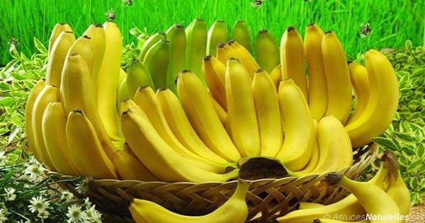 bananas-important-facts