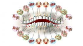 each-tooth-is-associated-with-an-organ-in-the-body-pain-in-each-tooth-can-predict-problems-in-certain-organs