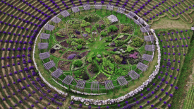 lavendar-labyrinth-min