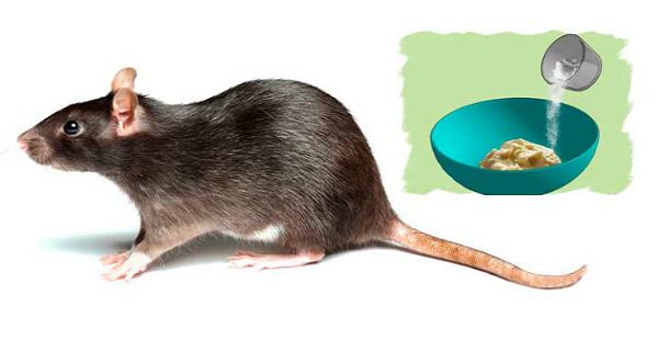 7 astuces naturelles pour vous d barrasser des rats de chez vous sans produits chimiques. Black Bedroom Furniture Sets. Home Design Ideas