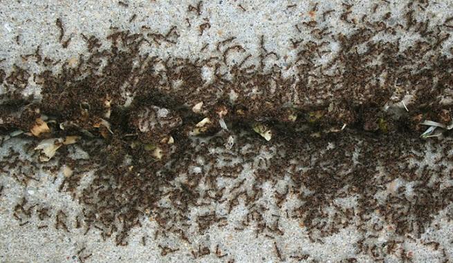 ant-cinnamon-fi