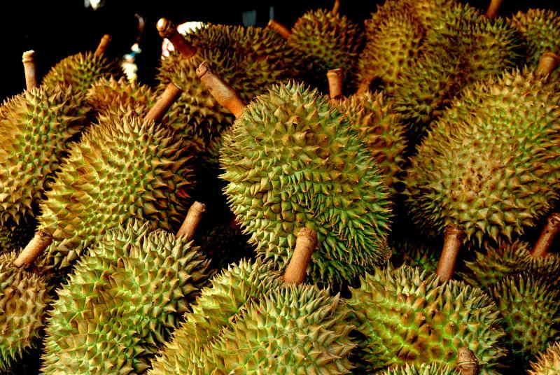 Voici pourquoi le fruit durian est judicieusement nommé le roi des fruits … Il est Unique et thérapeutique !