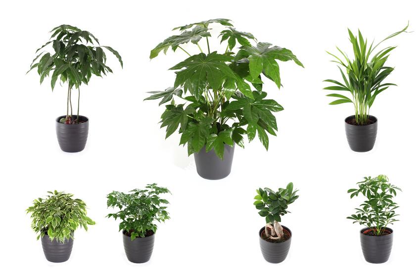 11 Plantes d'intérieur à éviter : Elles sont Toxiques et Dangereuses pour vos enfants et vos animaux de compagnie !