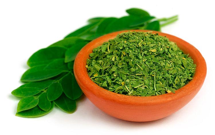Voici la méthode pour faire votre propre poudre de thé moringa à la maison … Simple et Savoureux !