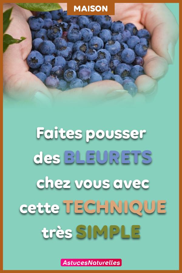 Consignes à Suivre : Voici Comment faire pousser de délicieux et beaux bleuets à la maison …