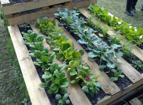 Voici comment faire pousser vos propres plantes biologiques, le jardinage à palette est ce qu'il vous faut :
