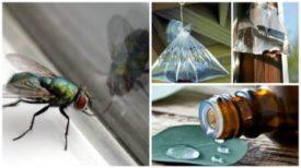 4 Astuces naturelles pour chasser les mouches de votre maison !