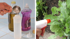 Dites non au « Roundup », et préparez cet herbicide à deux ingrédients pour votre jardin !