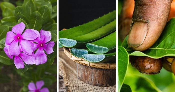 Médecine alternative : Découvrez ces plantes qui soignent à Madagascar !