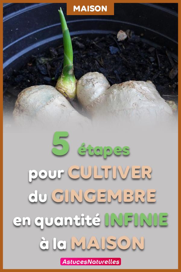 Plus besoin d'acheter du gingembre : Découvrez les 5 étapes simples pour le cultiver en quantité infinie à la maison !