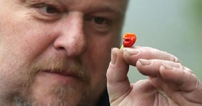 Le piment le plus puissant du monde, il pourrait vous tuer si vous l'avalez !
