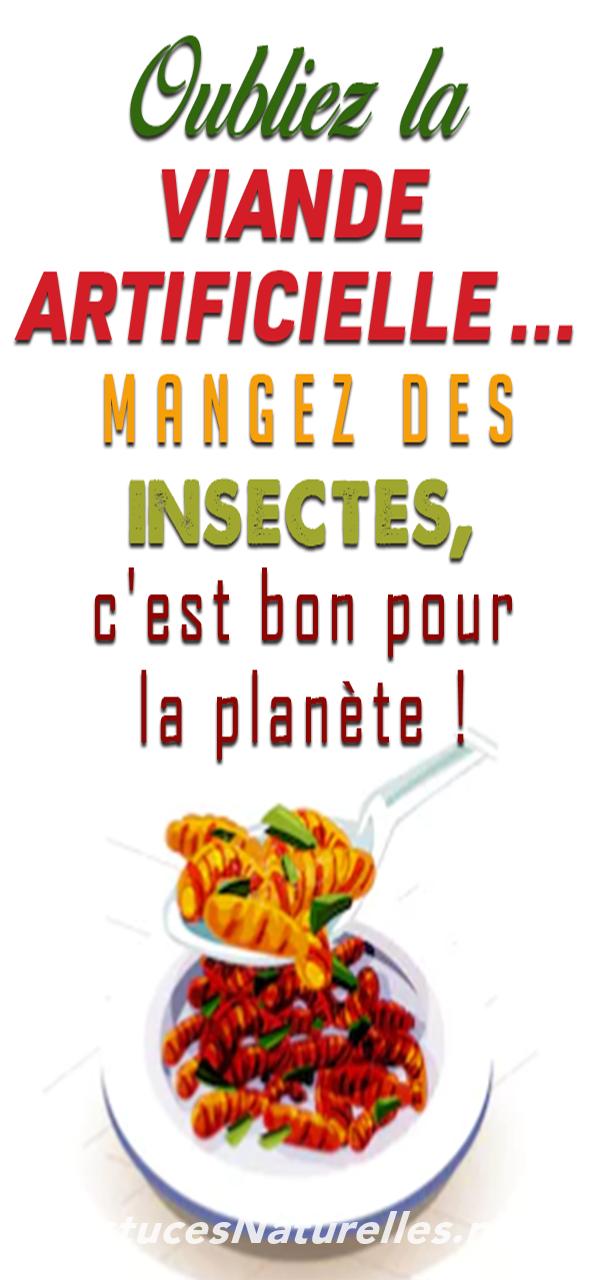 Oubliez la viande artificielle … Mangez des insectes, c'est bon pour la planète !