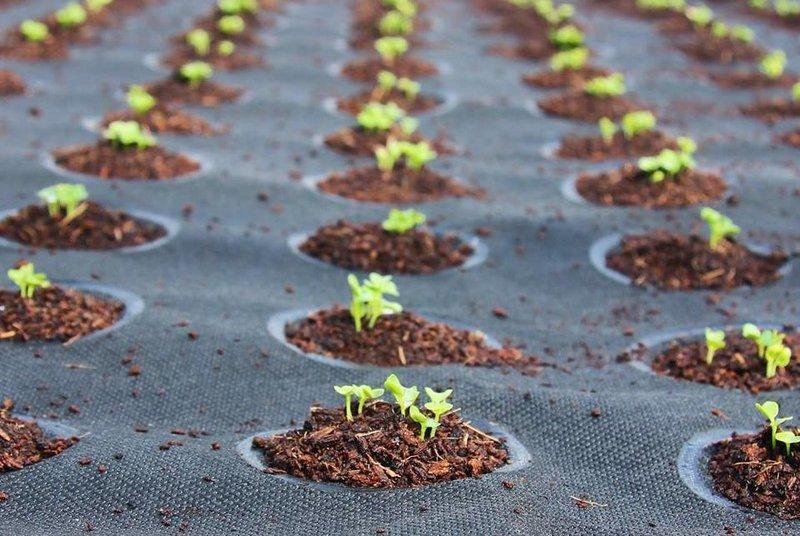 seedsheets