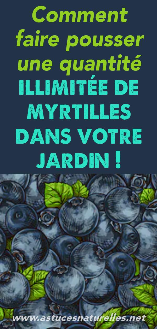 Comment faire pousser une quantité illimitée de myrtilles dans votre jardin !