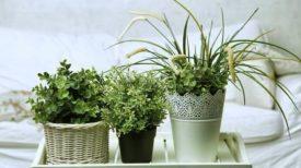 4 plantes à mettre dans votre chambre pour combattre l'INSOMNIE!