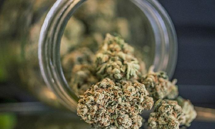 Une nouvelle étude rapporte la meilleure utilisation du cannabis pour protéger contre l'accident vasculaire cérébral !