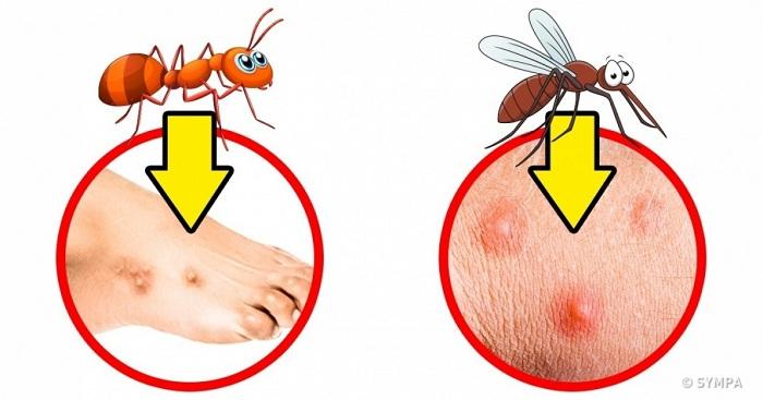 Comment savoir quel insecte vous a piqué?