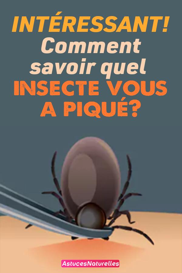 INTÉRESSANT! Comment savoir quel insecte vous a piqué?