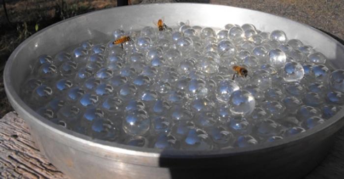 Comment réaliser un abreuvoir pour abeilles afin d'aider à hydrater nos pollinisateurs…