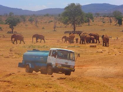 Cet homme effectue des heures de route chaque jour pour apporter de l'eau aux animaux sauvages !