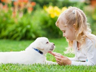 Les chiens peuvent aider à protéger les enfants contre l'eczéma et à soulager les symptômes de l'asthme !