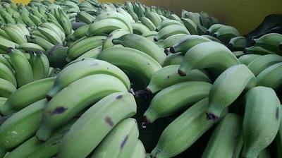 Quel type de banane consommez-vous ? Votre réponse a un effet important sur votre santé…