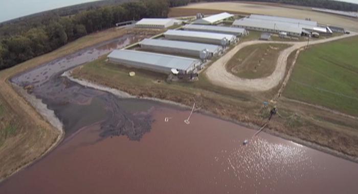 Des images filmées par un drone révèlent ce qui se passe chez le plus grand producteur de porc aux États-Unis !
