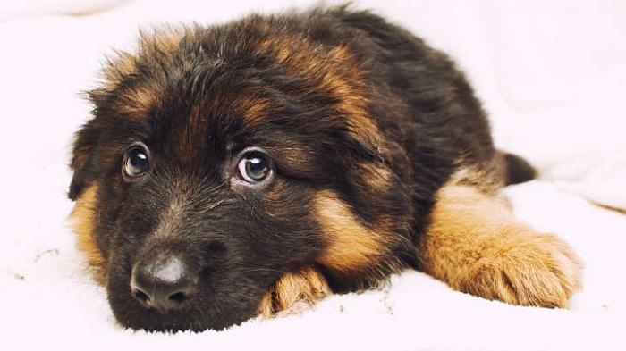 Si vous aussi vous sympathisez plus avec des chiens que des humains, voilà l'explication que la science donne à cela.
