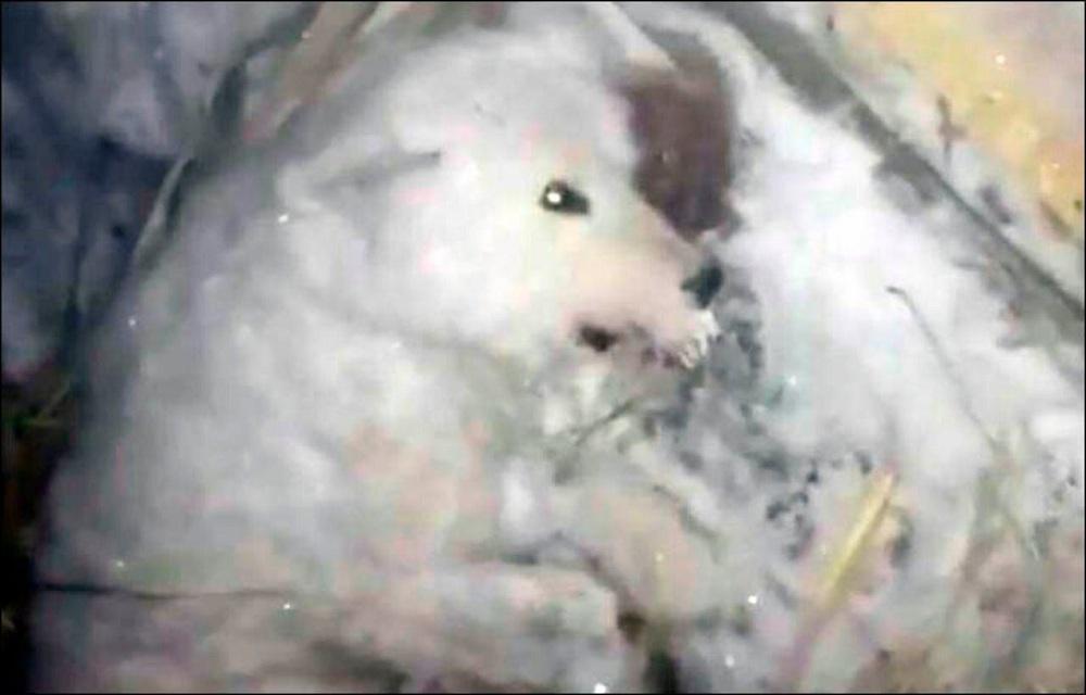 Un propriétaire de chien sans cœur congèle son chien et le laisse pour mort !