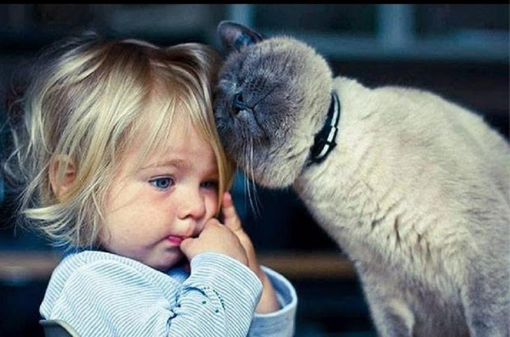 6 avantages insoupçonnés de vivre avec un chat !