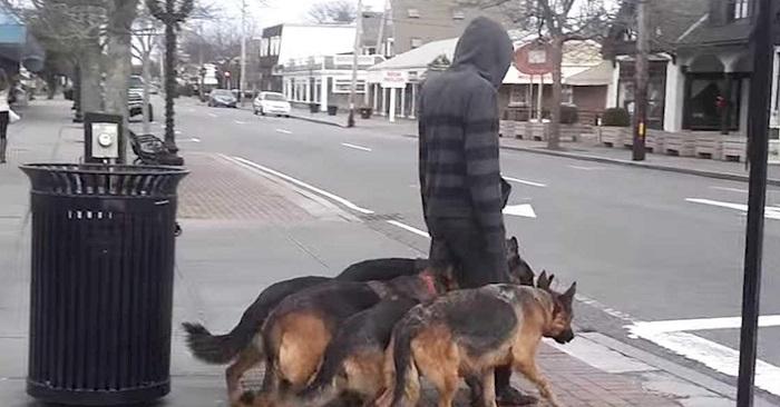 La façon dont cet homme promène ces chiens est tout simplement impressionnante !