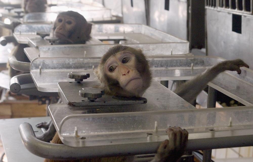 Volkswagen forcent des singes à inhaler des gaz d'échappement de ses modèles diesels