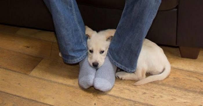 Votre chien vient s'asseoir chaque fois sur vos pieds ! Voici pourquoi…