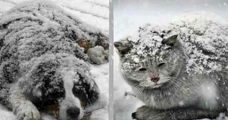 Des personnes sans cœur laissent leurs animaux de compagnie mourir froid dehors, alors que les températures continuent de baisser !
