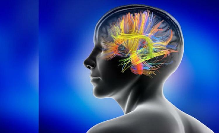Une raison de plus d'éviter le stress : Le stress prolongé entraîne des modifications durables dans le cerveau