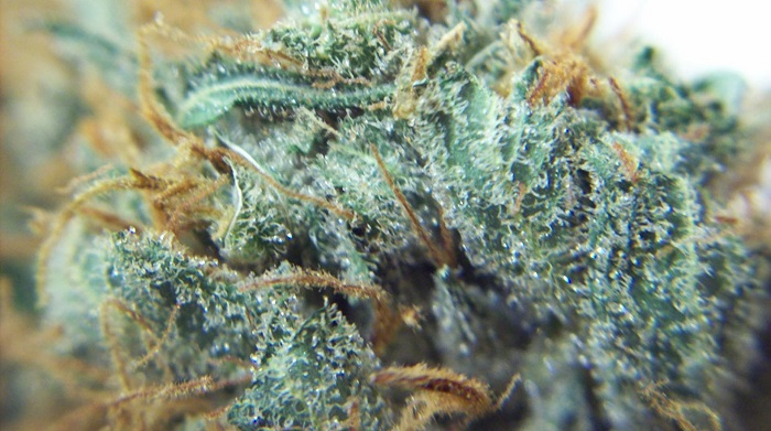 "Confirmation de la NASA : ""La marijuana contient"" de l'ADN étranger ""provenant de l'extérieur de notre système solaire"""
