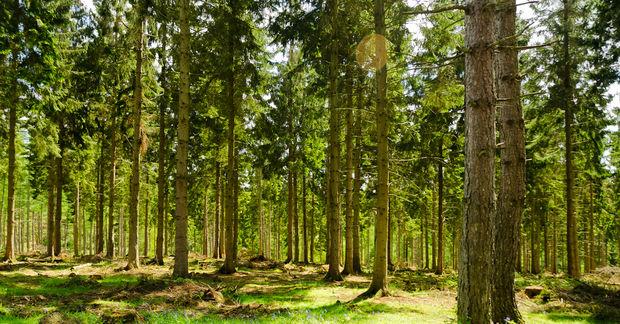 50 millions d'arbres, le grand projet de reboisement destiné à créer une forêt entière dans la région nord d'Angleterre !