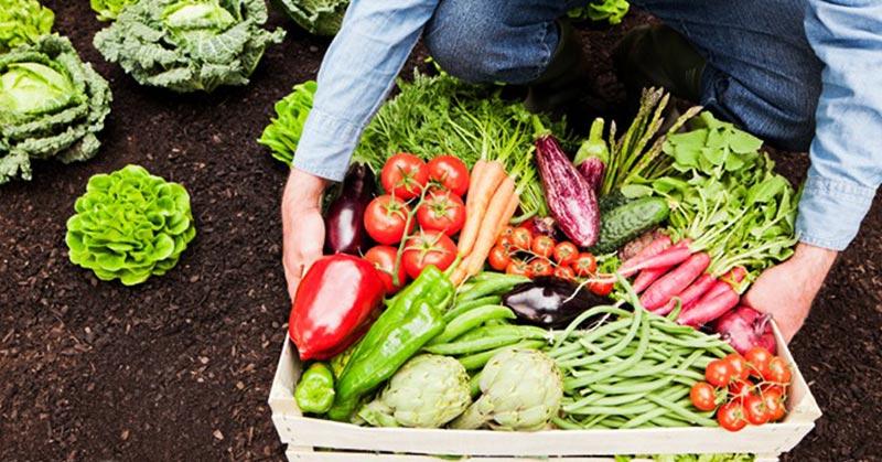 Faire pousser des légumes dans son jardin est désormais considéré comme une infraction judiciaire par les tribunaux de Floride
